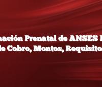 Asignación Prenatal de ANSES Fecha de Cobro, Montos, Requisitos